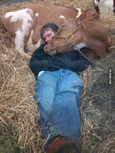 Cow and boy, napping