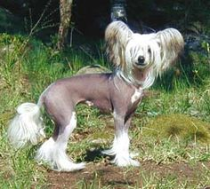 Today a dog that looked just like this only with less hair and a snaggle tooth decided to run on to my front porch and torture my real dogs. After I caught him. I had to wander the neighborhood looking for his family. Strange dog!