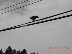 Winfield BC crow clear for take off