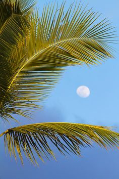 Palm and Moon