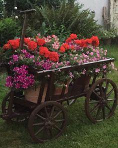 Leiterwagen in voller Blüte
