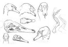 swan_studies.jpg (982×680)