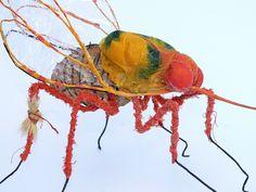 insect anna van bohemen