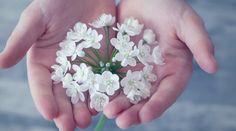 6 vecí, ktoré sa Vaše deti naučia, keď v nedeľu vynechávate svätú omšu – Modlitba.sk Small Flowers, White Flowers, Flora Flowers, Beautiful Flowers, Organic Skin Care, Natural Skin Care, Couples Chrétiens, Special Education Law, Tarot