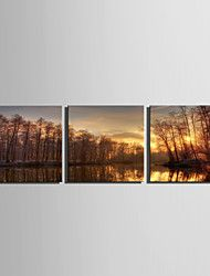 E-HOME® Stretched Canvas Art Sunset Under The River To The Woods Decoration Painting  Set of 3