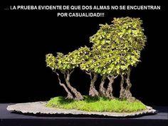 Árbol De La Amistad
