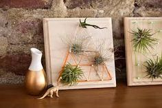 One of our all-time favorite DIY basics here at Brit + Co. was making string art signs. We decided it was time for a new take on the classic, and what better way to upgrade than by adding air plants? String Art Diy, Diy Wall Art, Outdoor Plants, Air Plants, Air Plant Display, Plant Wall, Do It Yourself Home, Home Interior, Craft Gifts