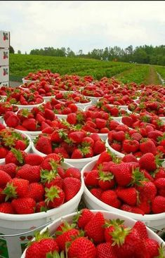 Spring is #strawberry season in #Florida and you can enjoy nature's bounty in many ways! Buy at local farmers markets, grocery stores, or pick your own at nearby farms. At #RE/MAX Flagstaff, our dedicated REALTORS® are driven to serve you and are committed to success. Please let us know how we can assist you with your #realestate needs. Call us at (386) 246-8585.
