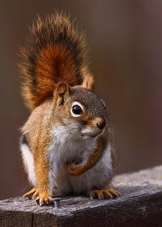 ♥Squirrel♥