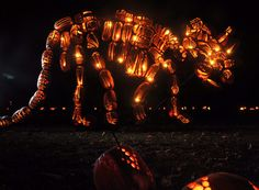 mammoth pumpkin carvings at the annual Great Jack o'lantern Blaze at Van Cortlandt manor in New York