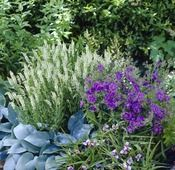 Purple and white summer border