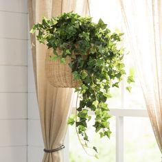 Mini Hanging Bush Ivy Plant