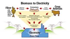 Biomass electricity is drawn from combusting or decomposing organic matter. Biomass plants power homes and businesses with electricity from waste matter that would have been released into the atmosphere, added fuel to forest fires, or burdened landfills.