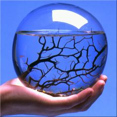 I want one of these! EcoSphere is a self-sustaining ecosystem, you never have to feed the life within. Simply provide your EcoSphere with a source of indirect natural or artificial light and enjoy this aesthetic blend of art and science, beauty and balance.