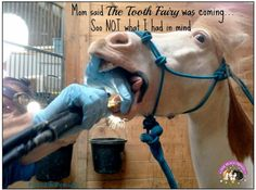 Sounds like something my horses would say