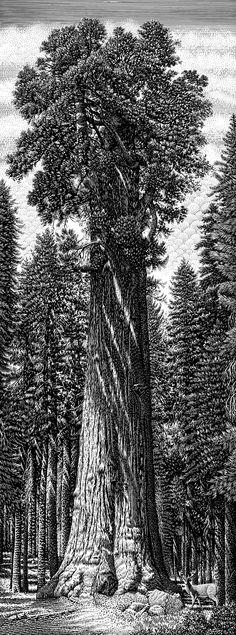 Nature by Michael Halbert, via Behance