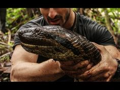 Paul Rosolie is consumed by an anaconda for his show, 'Eaten Alive,' on the Discovery Channel. Anaconda Snake, Green Anaconda, Discovery Channel, National Geographic Wild, Types Of Snake, Giant Snake, Housewives Of Atlanta, Real Housewives, Best Documentaries