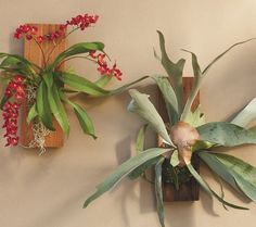 Living wall art - Mounted in moss on a reclaimed wood plaque, our fascinating Lava Spray - a tiny orchid with red flowers - and Staghorn Fern can be grouped to create a wall of living art or hung individually indoors or outside. Simply remove and water occasionally.