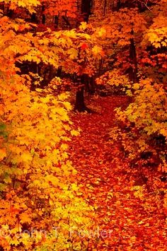 Vivid orange autumn