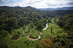 Picture of a stream winds through part of an unexplored valley in Mosquitia in eastern Honduras