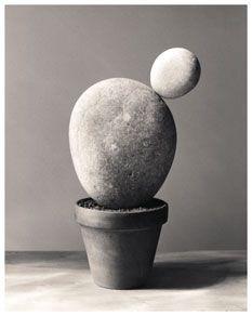 Cactus-Piedras,-2000 (Chema madoZ)