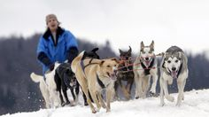 A musher rides his dog sled during a stage of the Sedivackuv Long dog sled race in Destne v Orlickych horach January 23, 2015.