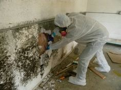 Causes of Water Damage and Mold Growth | Brooksville Mold Removal