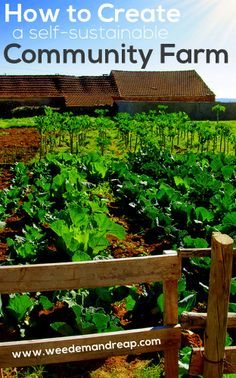 The Backyard Farmer #3: How to Create a Self-Sustainable Community Farm - Weed'em & Reap