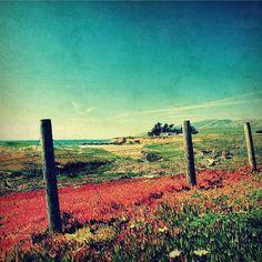 photography color photography big sur california by SeptemberWren, $28.00
