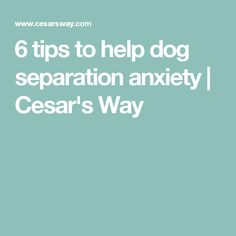 Seperation anxiety in dogs is a common problem that can be very difficult behavior to help or fix. We created a guide on how to deal with this behavior. Anxiety Tips, Social Anxiety, Anxiety Relief, Stress And Anxiety, Overcoming Anxiety, Healthy Pets, Dogs