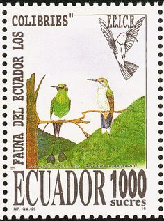 Booted Racket-tail stamps - mainly images - gallery format