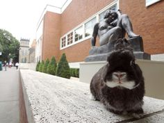 Looks like the front of the Portland Art Museum! I don't see a leash. Hope this bun isn't abandoned.