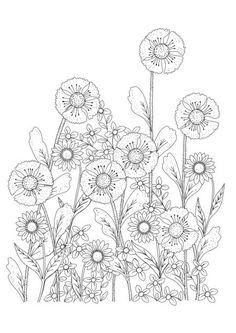 Amanda Burnett - Flowers  Linework