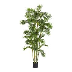 Areca Palm Silk Tree - 6 Feet High ** Continue to the product at the image link.