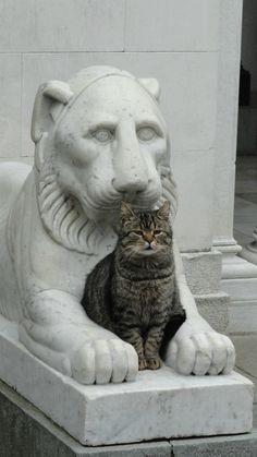 Царь зверей кот, львы, царь