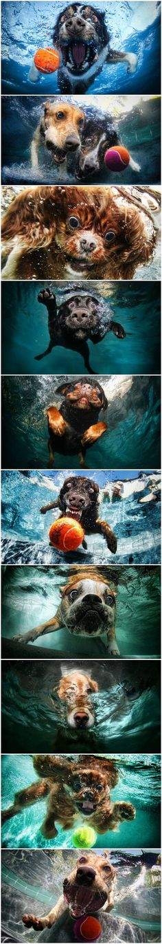 underwater dogs // fetch