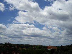 Buitre Leonado sobre cielos nubosos Parque Natural Tajo internacional