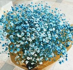 Flower Box Gift, Flower Boxes, Amazing Flowers, Beautiful Flowers, Gypsophila Elegans, Baby Flower, Baby's Breath, Flower Aesthetic, Doraemon