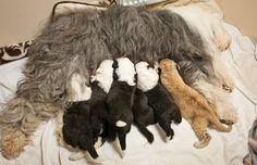 Weird news of the week: October 15, 2014 Dog nurse lion cub... Wow...