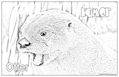 Poster Colour, Wildlife, Posters, American, Etsy, Animals, Shopping, Animais, Animales