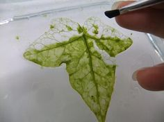 Flip the leaf over and clean the other side