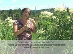 ▶ Plante médicinale : Sureau - YouTube