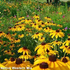 The Xeric Gardener: Horticulturalist David Salman's informative blog - High Country Gardens - NM nursery - Intermountain West Gardening Tips - #XericGardening