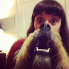 Epic Dog Beards  Don t like the old fashioned dog beard meme as everyone else is doing  then go ahead and take the pi