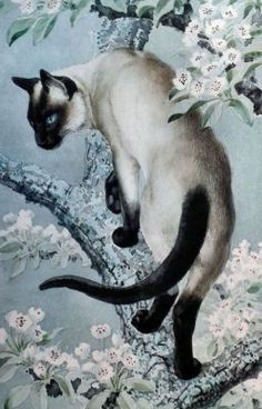 Meet Beautiful Cats By Charles Frederick Tunnicliffe : Charles Frederick Tunnicliffe, Siamese Cat On A Branch Of Apple Blossom, watercolor I Love Cats, Crazy Cats, Cool Cats, Siamese Cats, Cats And Kittens, Pet Cats, Cat Embroidery, Gatos Cats, Cat Drawing