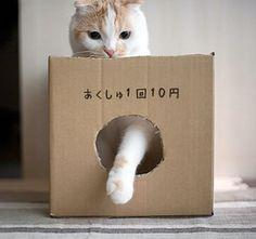 猫の握手屋さん (1回10円): ひとくちフォト   動物写真とアイデア写真とネタ画像と気になる動画