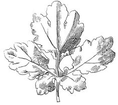 Vintage Clip Art - Beautiful Black and White Leaf Images - The Graphics Fairy
