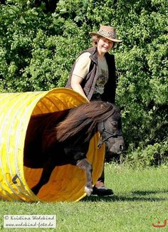 Horsemanshipschule - Kirstin Reese