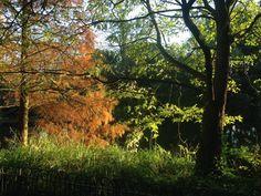 Battersea park in November