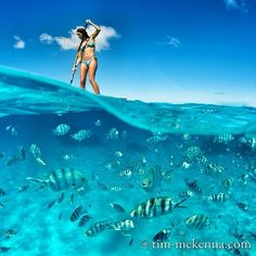"""Quem você levaria para esse lugar? Inspire-se, Sonhe, Explore e Descubra. Tenham uma ótima semana!  #FamiliaGopro #Sup #Fotododia Créditos  @Timmckenna…"" Gopro, Underwater Photography, French Polynesia, Bora Bora, Paddle Boarding, Diving, Illusions, Surfing, Disney Characters"